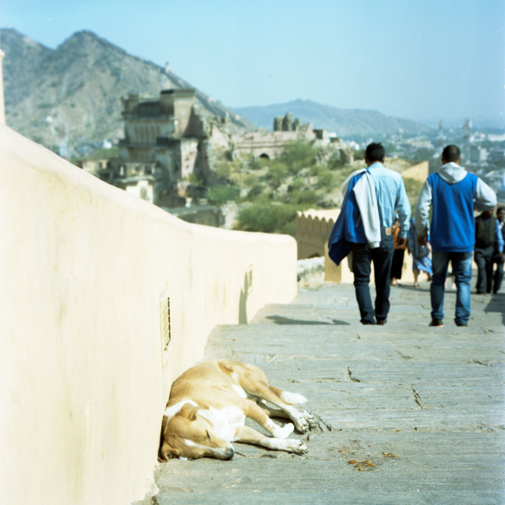 Sleep at Amer Fort Rolleiflex 2.8D | Kodak Portra 400