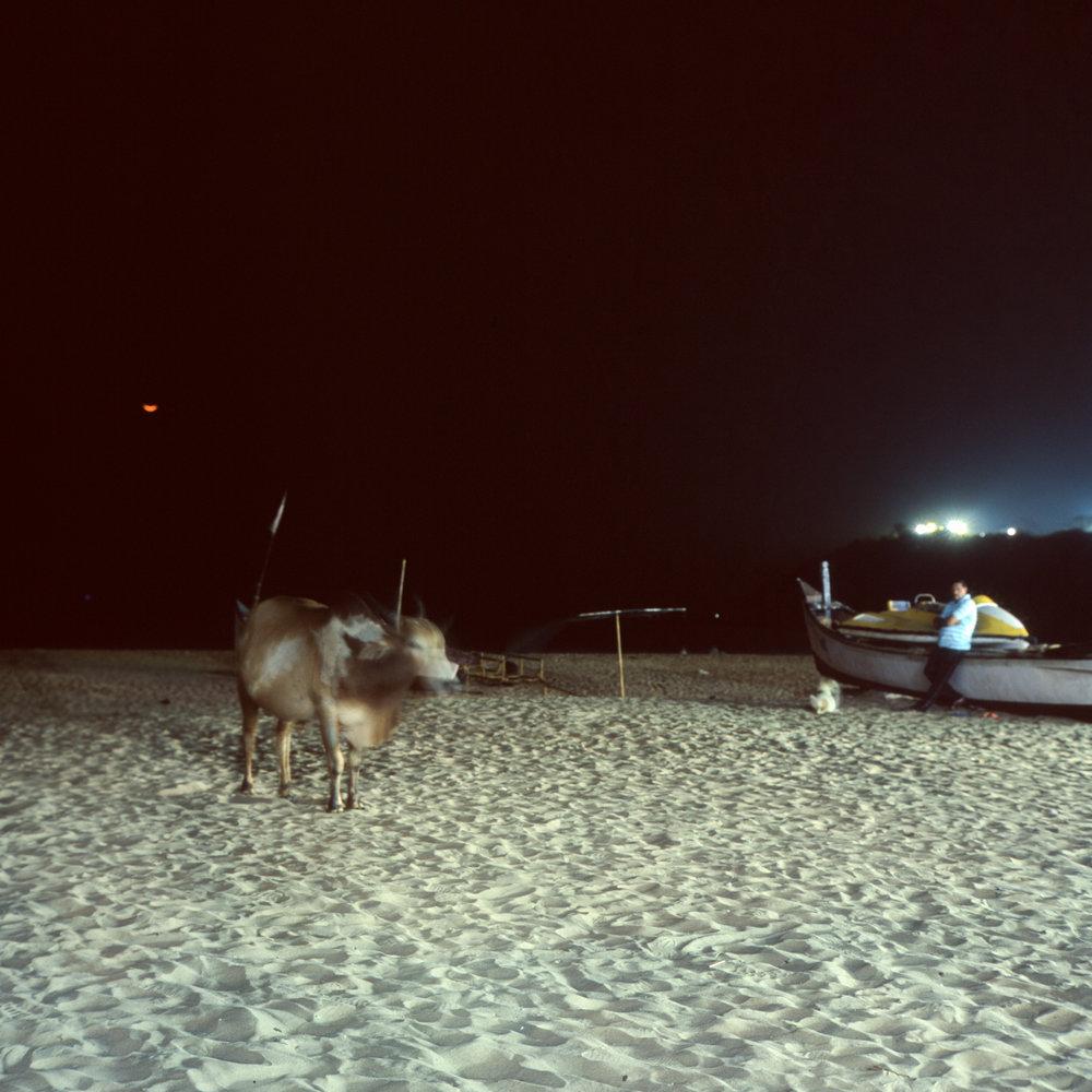 Beach Cows Rolleiflex 2.8D | Fuji Provia 100f