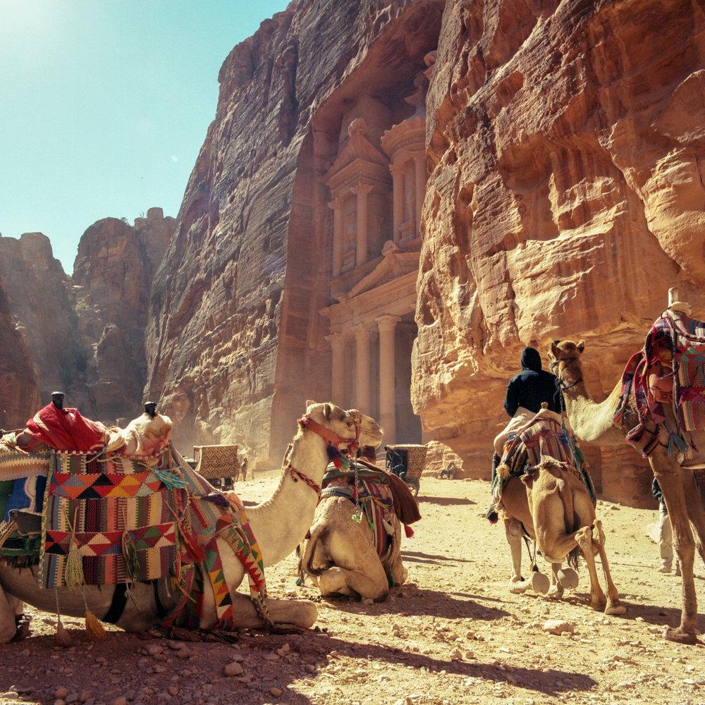 Camels everywhere Hasselblad 501c   Kodak Portra 400