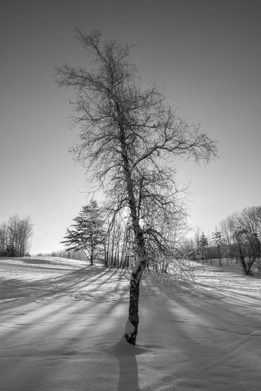 Woods-Jan-2018-9.jpg