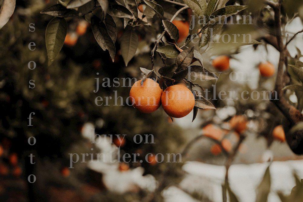 Apelsinträd. Grekland