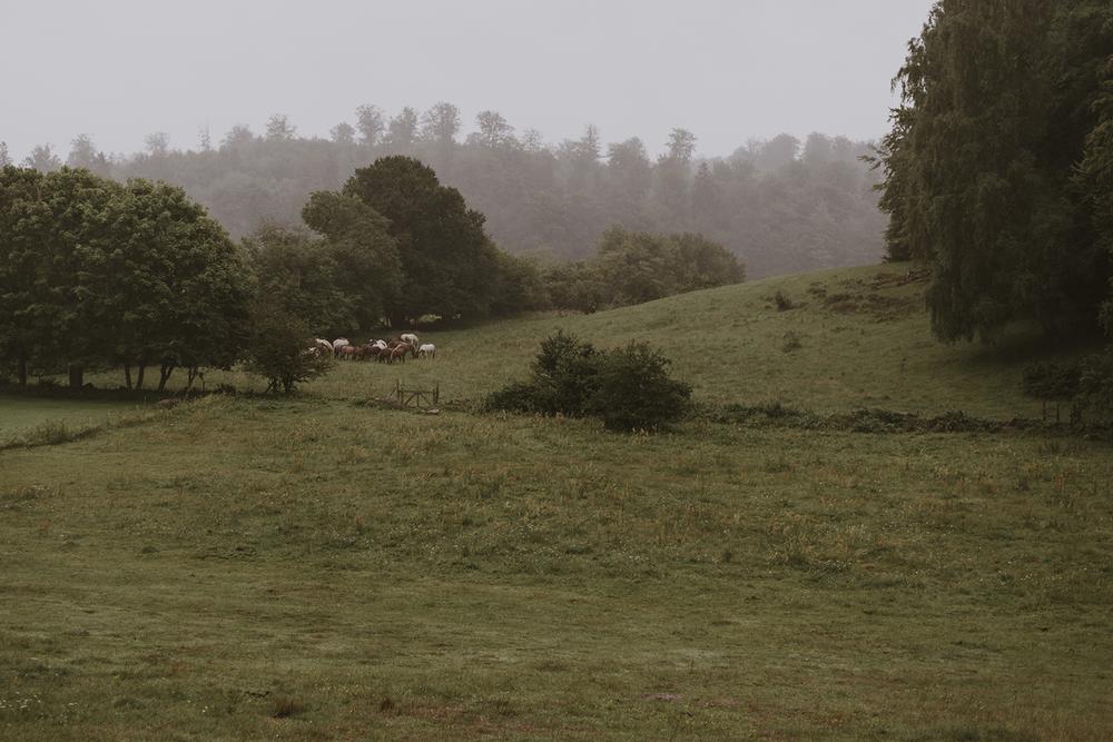 brollopsfotografering-juli-regn-landet-hästar-utomhus-seos-fotografi-dokumentär-stil.png