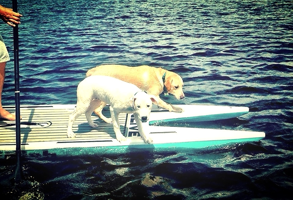 Two of our pups enjoying some time on the water