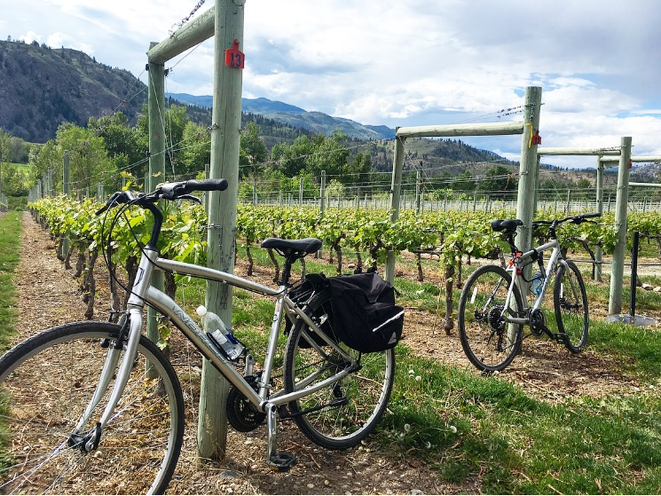 Biking from Vinyard to Vinyard