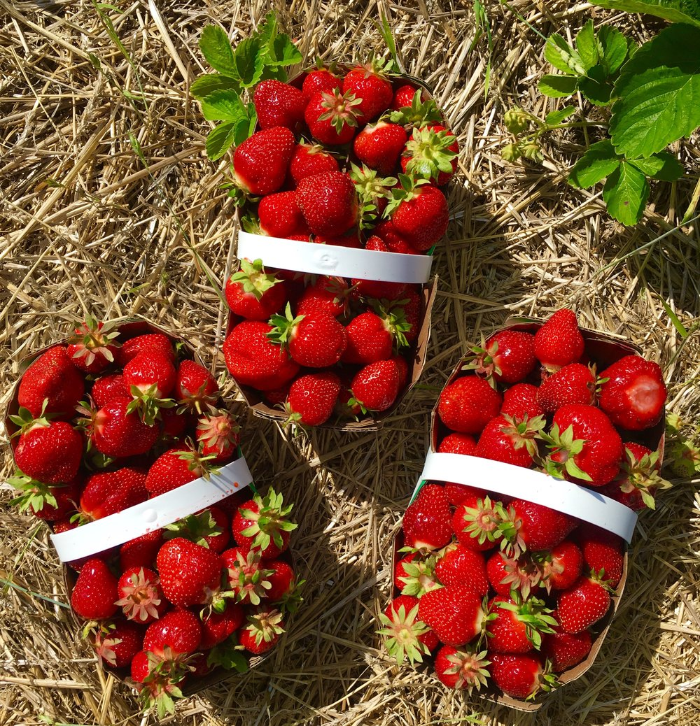 Fresh Organic Ontario Strawberries