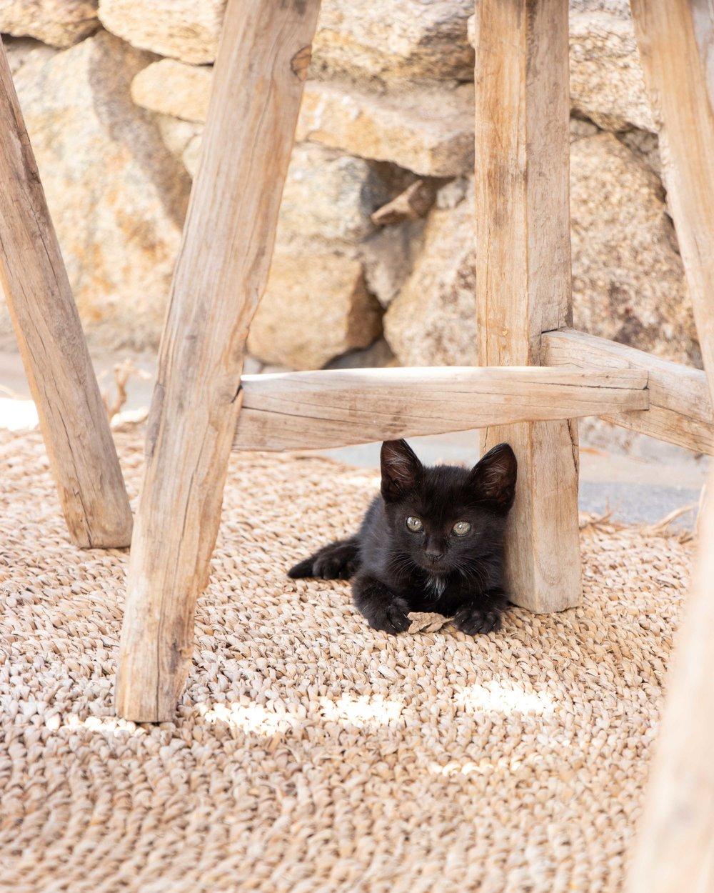 San Giorgio - Kitten