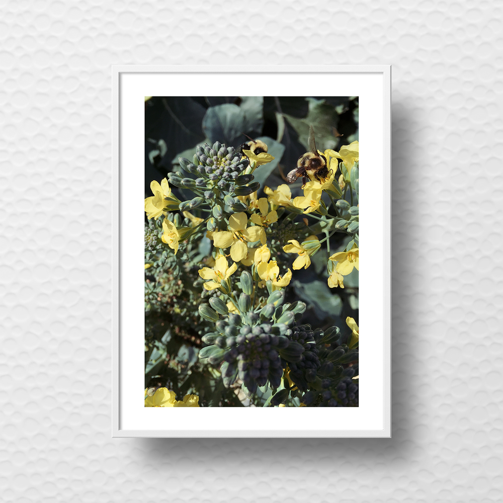 minted-challenge-minted-x-west-elm-belia-simm-broccoli-bees.jpg