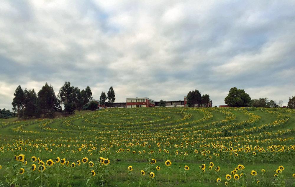 Get Sunflowered_Moe Spiral 01.jpg