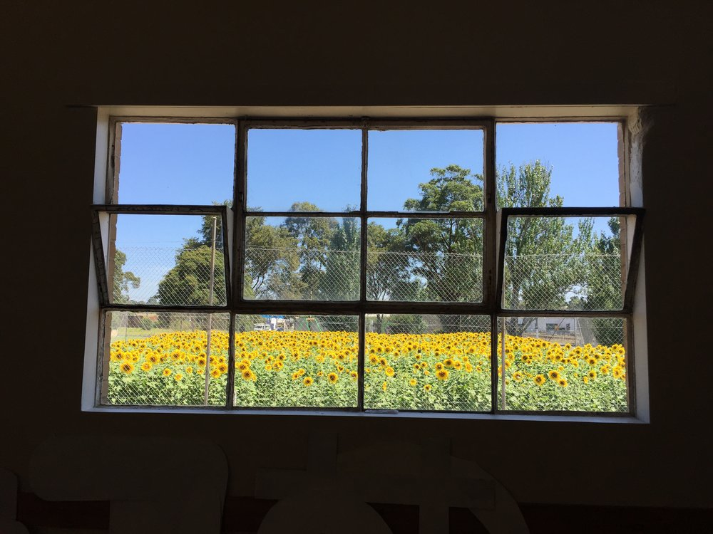 Get Sunflowered_Traralgon 01.JPG
