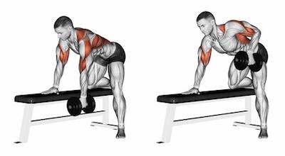 Exercise Database (Back15) - One Arm Dumbbell Row on Bench ...