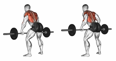 Overhand Grip Barbell Bent Over Rows