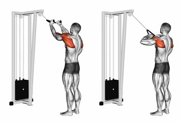 exercise database shoulders16 standing cable rear delt rope