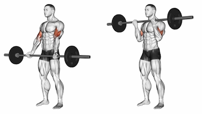 Wide-Grip Standing Barbell Biceps Curl