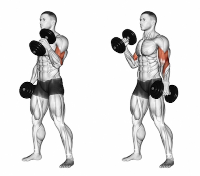 Standing Alternate Dumbbell Biceps Hammer Curls