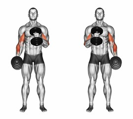 Standing Alternate Dumbbell Cross Body Biceps Hammer Curls