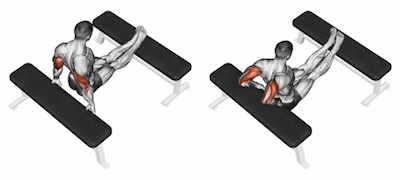 Bench Triceps Dips