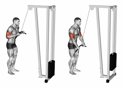 Standing Cable Bar Triceps Pushdown
