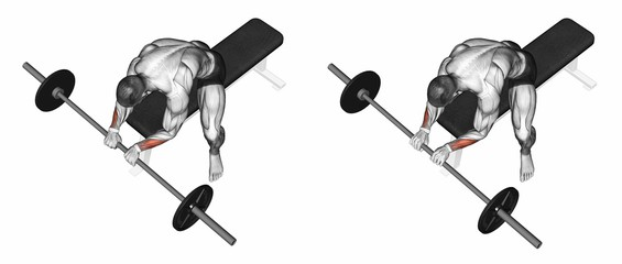 Palms Down Barbell Wrist Curl