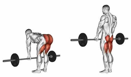 Barbell Stiff Leg Deadlifts
