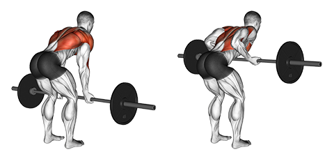 Barbell Underhand Bent Over Row