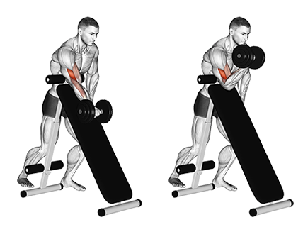 Standing One Arm Dumbbell Incline Biceps Curl