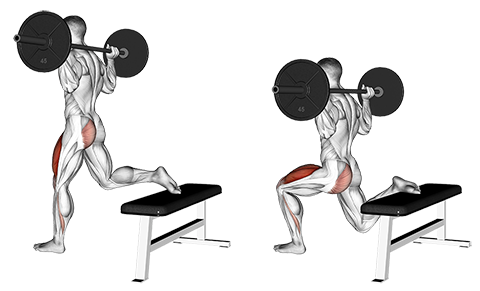 Single Leg Barbell Split Squat