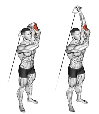 Standing Overhead Cable Triceps Extensions