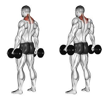 Standing Dumbbell Shrugs