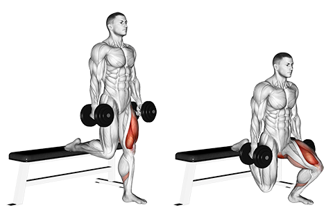 Single Leg Dumbbell Split Squat