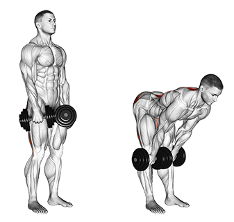 Dumbbell Stiff Leg Deadlifts
