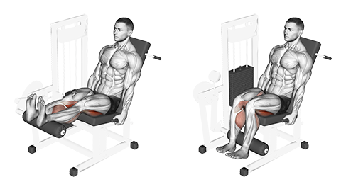 Seated Hamstring Curl