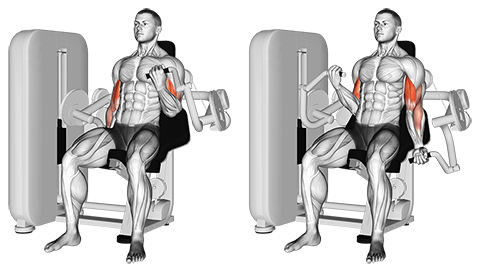 Lever Biceps Curl