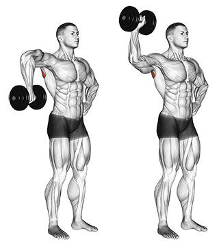 Standing Upright One-Arm Dumbbell Shoulder Rotation
