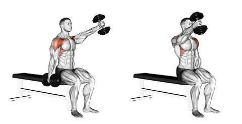 Seated Alternate Dumbbell Front Raises