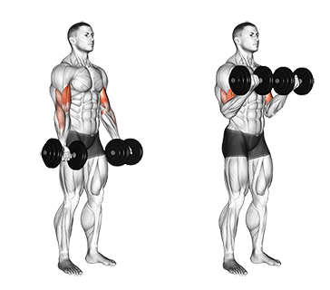 Standing Dumbbell Biceps Curl