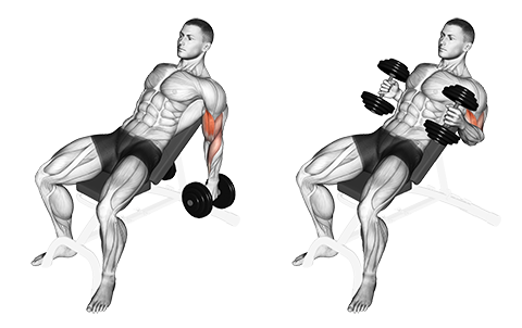 Seated Incline Dumbbell Biceps Hammer Curl