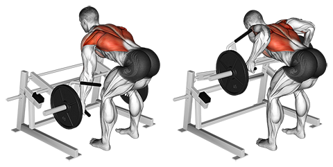 Lever Rows