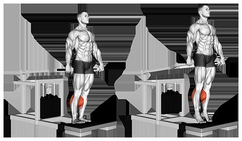 Bench Press Machine Standing Calf Raises