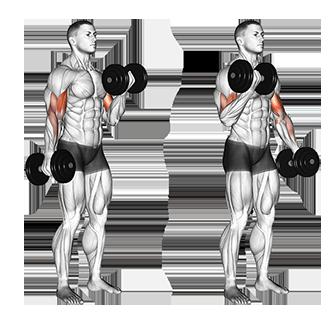 Standing Alternate Dumbbell Biceps Curls