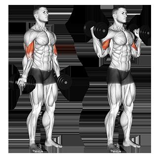 Standing Dumbbell Inner Biceps Curl