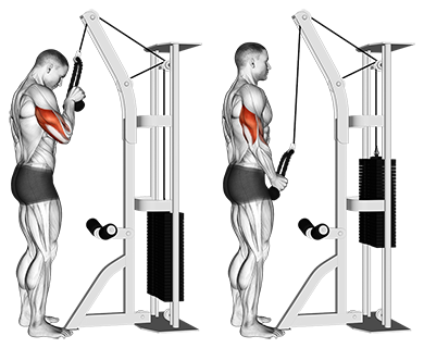Standing One Arm Tricep Pushdowns (Overhand Grip)