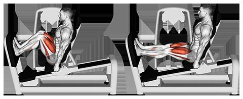 Seated Machine Squats