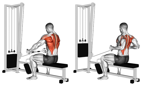 Bent Bar Seated Cable Row