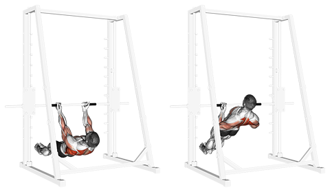 Underhand Grip Inverted Back Row