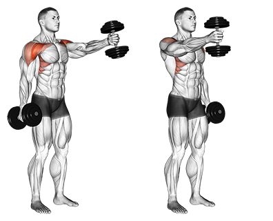 Standing Alternate Vertical Dumbbell Front Raises