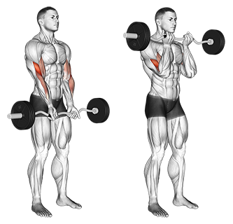 Narrow Grip Standing EZ Bar Curls