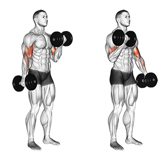 Standing Alternate Dumbbell Biceps Curls