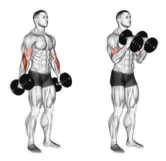 Standing Dumbbell Biceps Hammer Curls