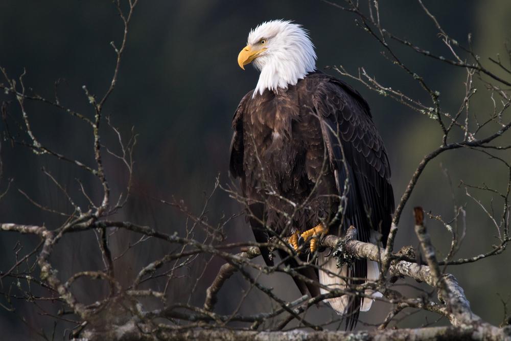 Eagle5 Web.jpg