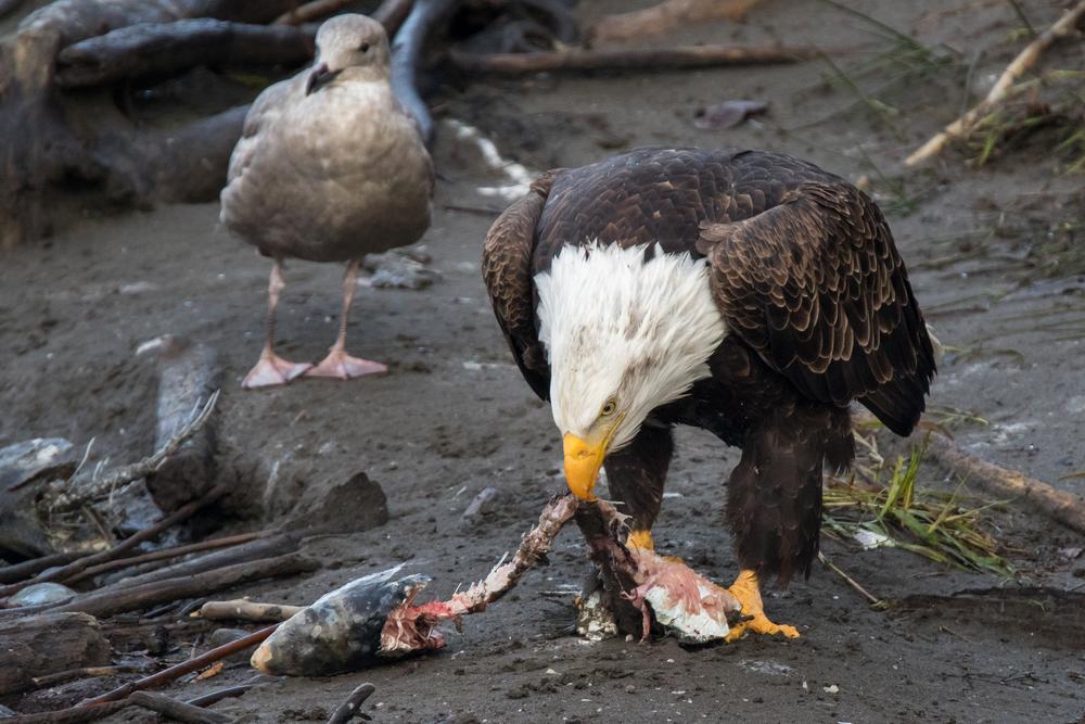 Eagle8 Web.jpg